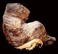 Mummie van een Baviaan.