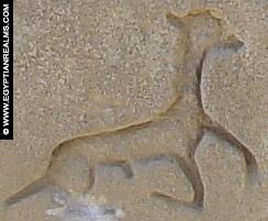 Oud-Egyptisch hieroglief van een giraf.
