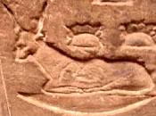 Oud-Egyptisch hieroglief van een koe.