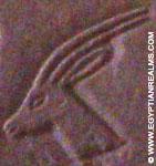 Oud-Egyptisch hieroglief van een hert.