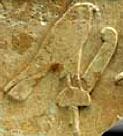 Oud-Egyptisch hieroglief van een havik met veer.