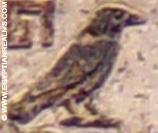 Oud-Egyptisch hieroglief van een zwarte raaf.