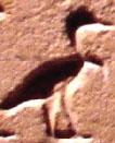 Oud-Egyptisch hieroglief van een ooievaaar.