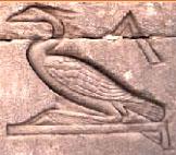 Oud-Egyptisch hieroglief van een feniks.