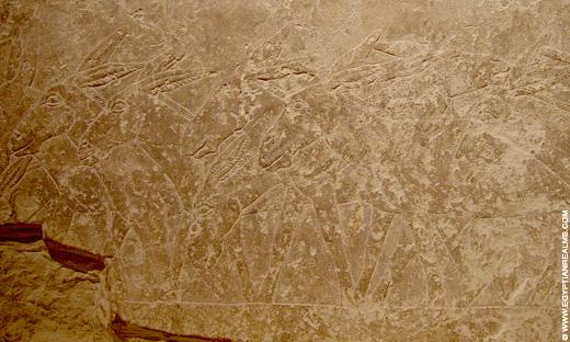 Egyptisch relief van ezels.