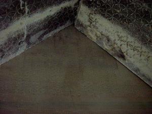 Sterren boven de sarcofaag
