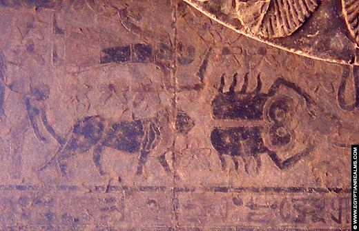 Sterrenbeeld Kreeft afgebeeld op het plafond van de Esna Tempel.