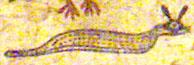 Oud-Egyptisch hieroglief van de adder.