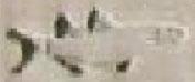 Oud-Egyptisch hieroglief van een vis.