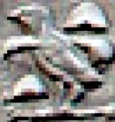 Oud-Egyptisch hieroglief van een kwartel.