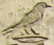 Oud-Egyptisch hieroglief van de specht.