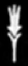 Oud-Egyptisch hieroglief van koren.