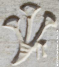 Oud-Egyptisch hieroglief van bloemen.