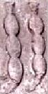 Oud-Egyptisch hieroglief van een peul.