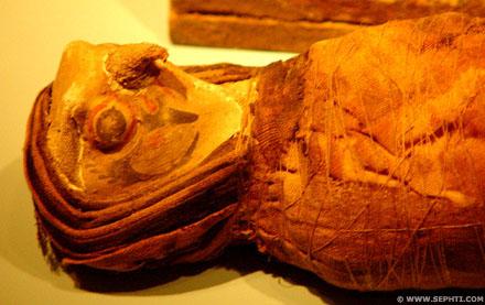 Mummie van een Havik.