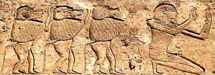 Bavianen en Pharaoh eren de Neter.