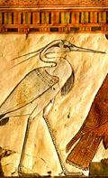 De Bennu vogel afgebeeld in een tombe.