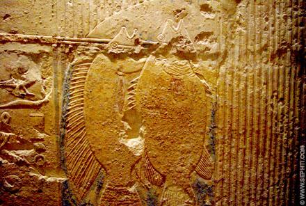 Bij het Papyrus moeras worden de gevangen vissen binnen gehaald.