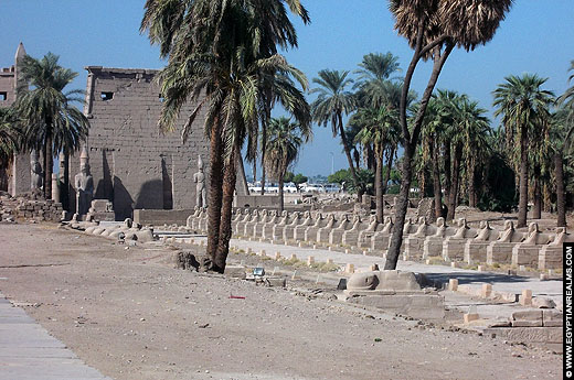 Avenue of the Sphinxes in Luxor.