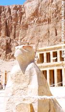 Havik bij de Tempel van Hatjepsut.