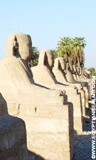 Sphinxbeelden bij de Luxor Tempel.