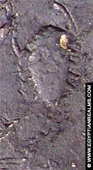 Sterrenbeeld Schorpioen afkomstig van de Zodiak te Dendera.