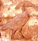 Hieroglyph Bennu.