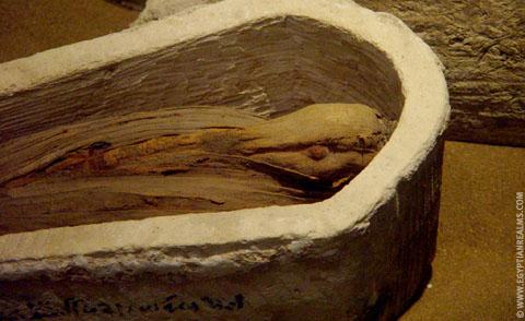 Mummie van een Ibis vogel.