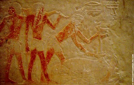 Oud-Egyptisch rellief van mannen die een stier slachten.