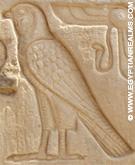 Oud-Egyptisch hieroglief van havik in de Kom-Ombo Tempel.