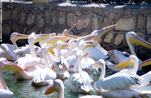 Vogels krijgen eten in de zoo van Cairo in Egypte.