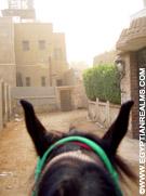 Per paard door de straten van Giza.