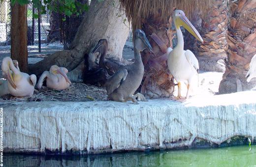 Vogels in de Zoo van Cairo.