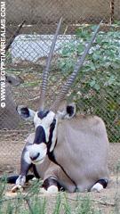 In de Zoo van Cairo.