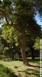 Botanic Island in Aswan.