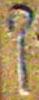 Hieroglyph of the shepherd's staff