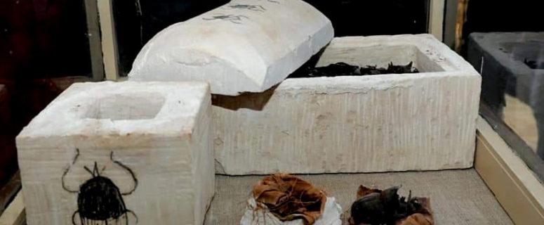 Mummified scarabs found at Saqqara.