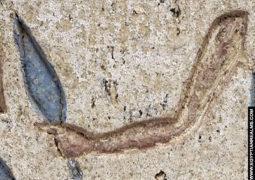 Ancient Egyptian hieroglyph Arm