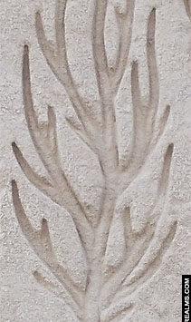Hieroglief van een boom
