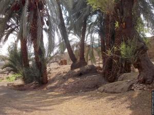 Palmbomen naast de Al-Tud Tempel