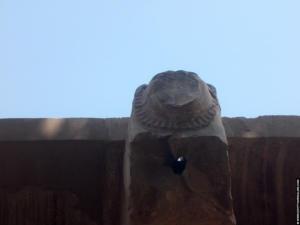 Leeuwenkop op de Witte Kapel